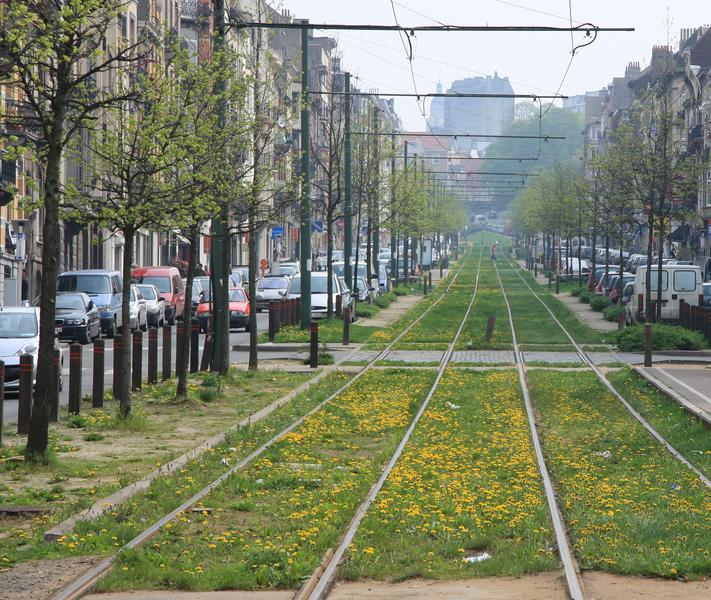 Forest adopte un règlement pour faciliter la verdurisation des rues par ses habitants